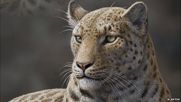Life reconstruction of Panthera blytheae based on skull CT data; illustrated by Mauricio Anton