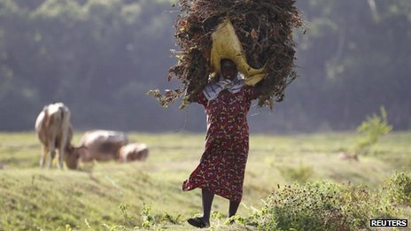 A Tamil woman carries fallen leaves and branches in Jaffna