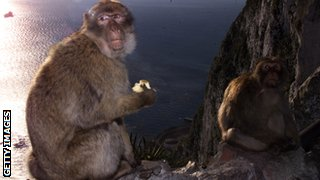 Monkeys live on the famous Rock of Gibraltar