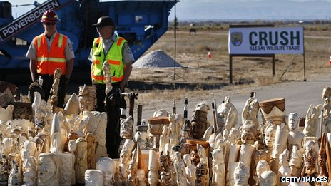 Large ivory items ready to be crushed. 14 Nov 2013