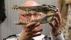 A man holding an alligator's head.