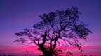 A purple and pink sky behind a silhouetted tree.