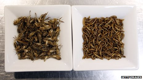 Cricket and worms at Aphrodite restaurant