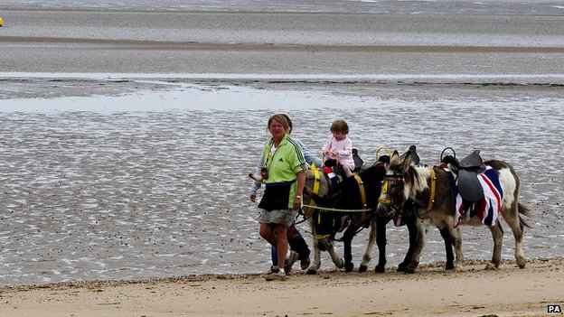 Donkeys on a beach