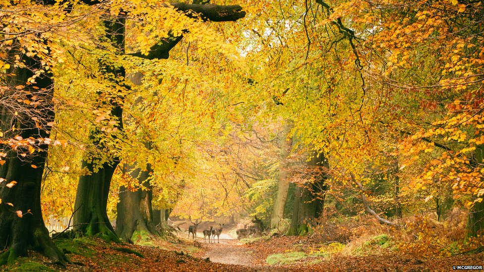 Ashridge Forest by Laura McGregor