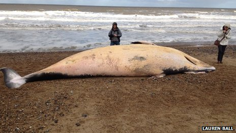 Whale on beach in Cromer