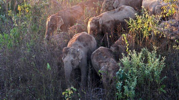 Wild Asian elephant herd resting in the shade of the valley