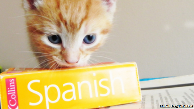 gato with a dictionary