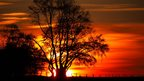 A flaming bright orange and yellow sky behind silhouetted trees.