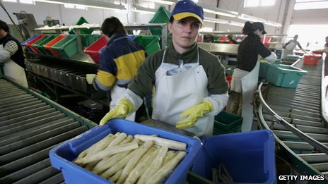 Polish workers sorting asparagus in Germany, file pic