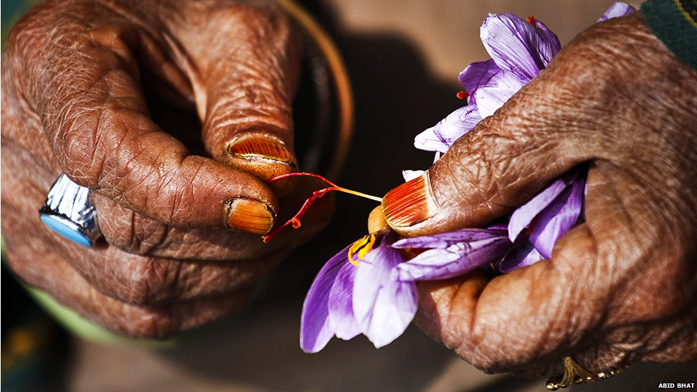 In pictures: Kashmiri saffron - BBC NewsKashmiri Saffron Bulbs