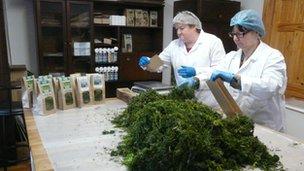 seaweed packaging