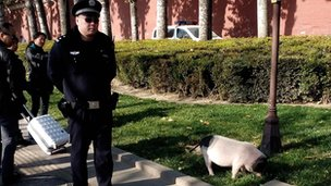 Beijing policeman with Pearl the pig