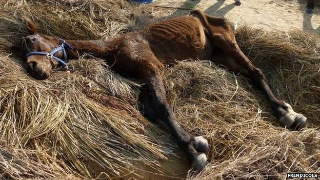 Horses rescued by animal rights NGO Frendicoes