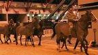 Horses being put through paces in British Military Tournament rehearsals
