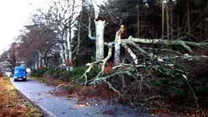 Tree down near Castle Fraser in Aberdeenshire