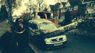 Tree on car