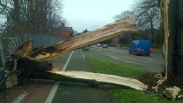 Tree blown down at Chester Road, Wrexham