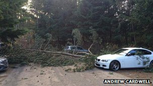 Tree fallen in Sherwood Forest Centre Parcs car park