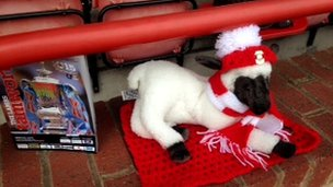 Lamb toy dressed in Tamworth scarf