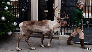 A reindeer in Downing Street