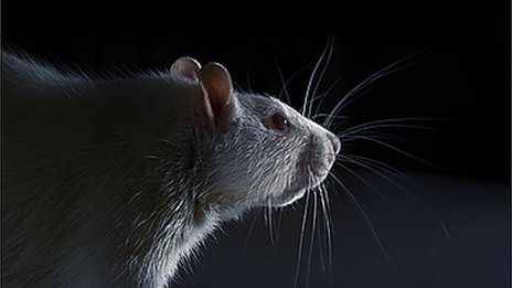 animal research and the anti vivisectionists Research paper animal experimentation many animal rights groups and anti-vivisectionists believe that animal that animal research is naturally.
