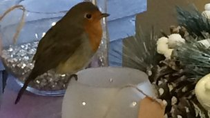 Robin in flower shop