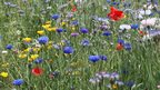 Graham Winter from Cardiff captured this bank of wild flowers near Pembroke's town wall