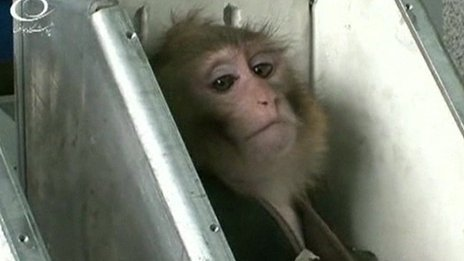Library images of monkey on state television in January 2013, when Iran claims it first sent a simian successfully into space