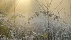Frosted vegetation. Sun rays shine down on them.