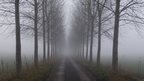 A tree lined path in the centre of the shot. Fog makes the scene look eerie and you can't see the end of the path.