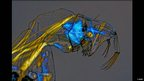 Phantom midge larva/Olympus BioScapes Digital Imaging Competition