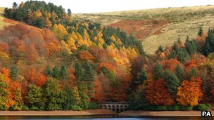Trees on Derwent Reservoir in the Peak District