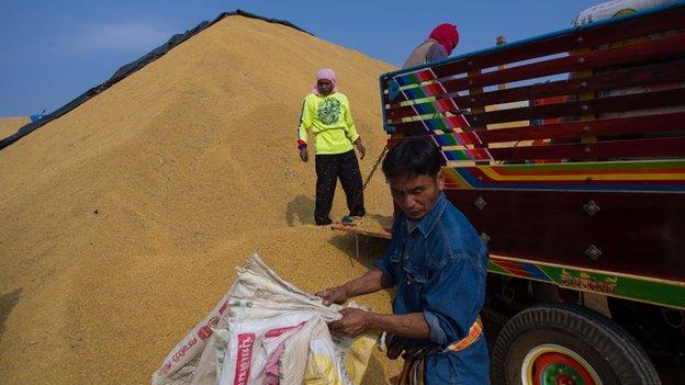 Rice farmers at Udon Thani