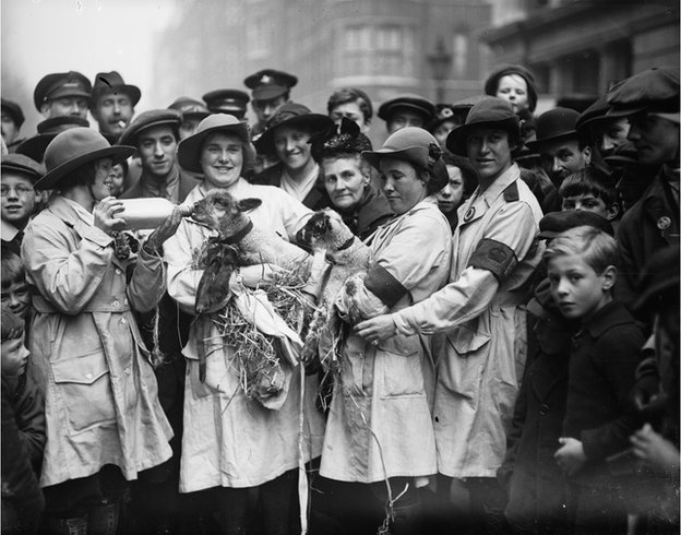 Member of the Women's Land Army holding a lamb