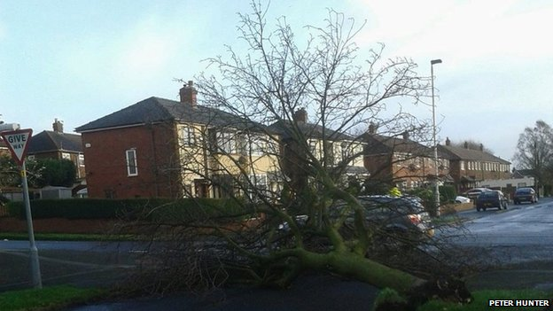 Tree down in Bolton, Greater Manchester