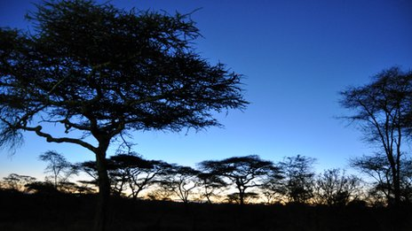 Serengeti at dusk