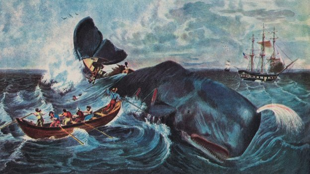 The Real Moby Dick Do Whales Really Attack Humans Bbc News
