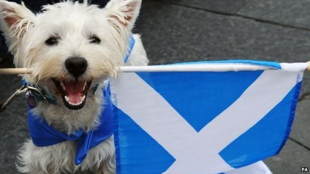 A dog holding a Scotland flag