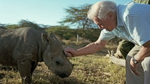David Attenborough with baby black rhino for Africa in 2012