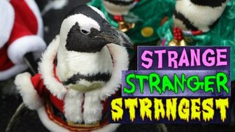 Penguin and strange logo