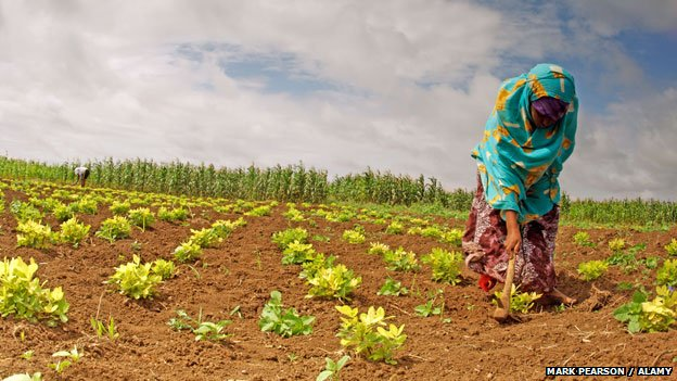 Farm worker planting crops in Lower Shabelle, southern Somalia