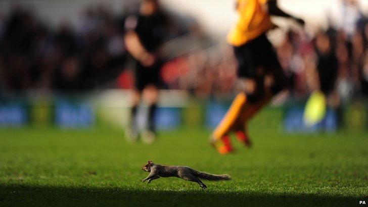 Loftus Road squirrel