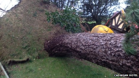 Tree fallen at Cadwgan Hotel