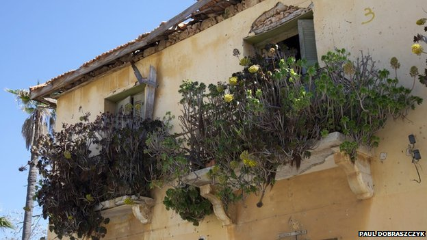 Overgrown window boxes