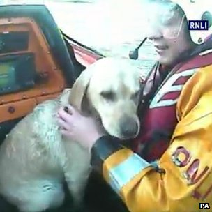 Undated handout video grab issued by the RNLI of RNLI volunteers saving a golden Labrador