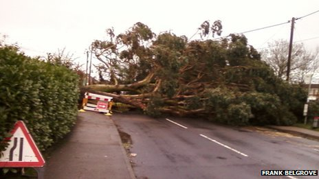 Fallen tree in Wivenhoe Road, Colchester
