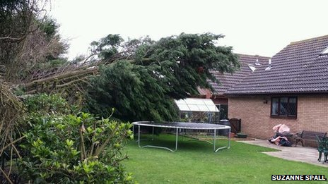 Tree fallen in garden