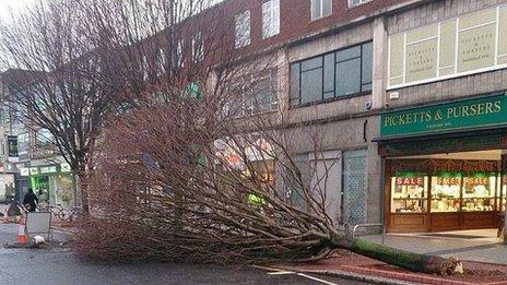 Tree in Southampton City Centre