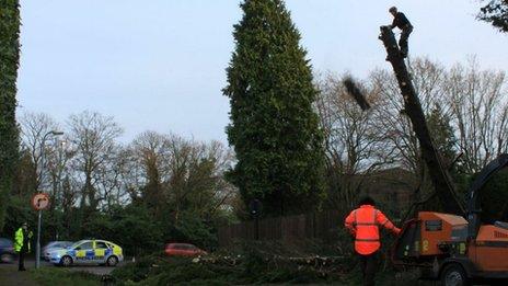 Dangerous tree being felled